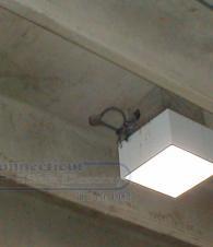Bird/Avian Control & Deterrent