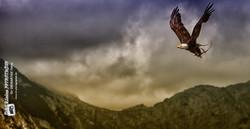 fly Eagle...fly