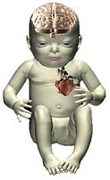 Feto Cardio Neuro Imagen.png