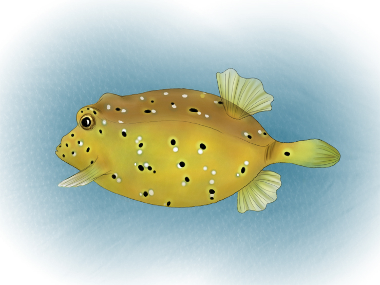 Box fish