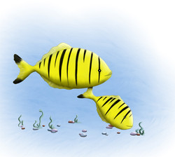 Yellow pilot fish