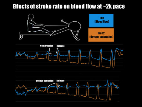 The Effects of Stroke Rate on Blood Flow