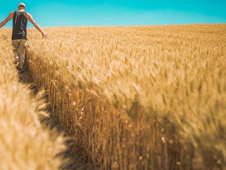 Γιατί είναι περιζήτητη η αγροτική γη: Οι 11 λόγοι για να επενδύσετε