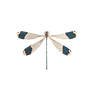 dragonfly-1541241__340.png