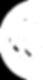 Kraal-Pungawerewere-BLANCO-WEB---G.scout