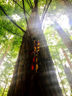 Bosque de secuoyas - Junio 2017 - Scouts Magma