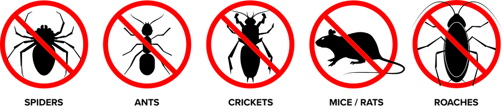 Bugs_003.png