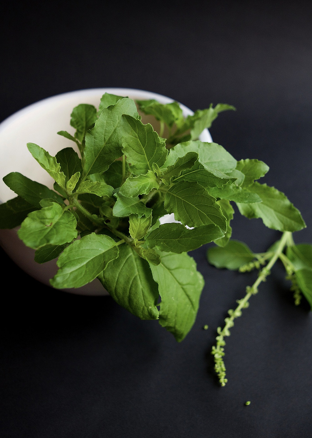 Holy basil, also known as tulsi