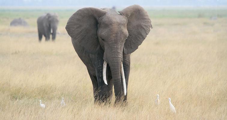 elephant-605275_960_720.jpg