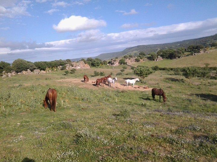 Facebook - Arabian mares.jpg.jpg.jpg.jpg
