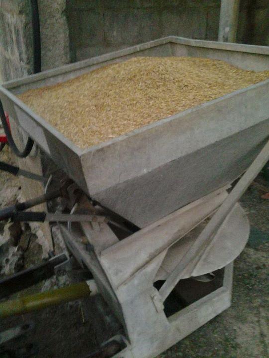 Facebook - Starting to oat seed.jpg.jpg.jpg