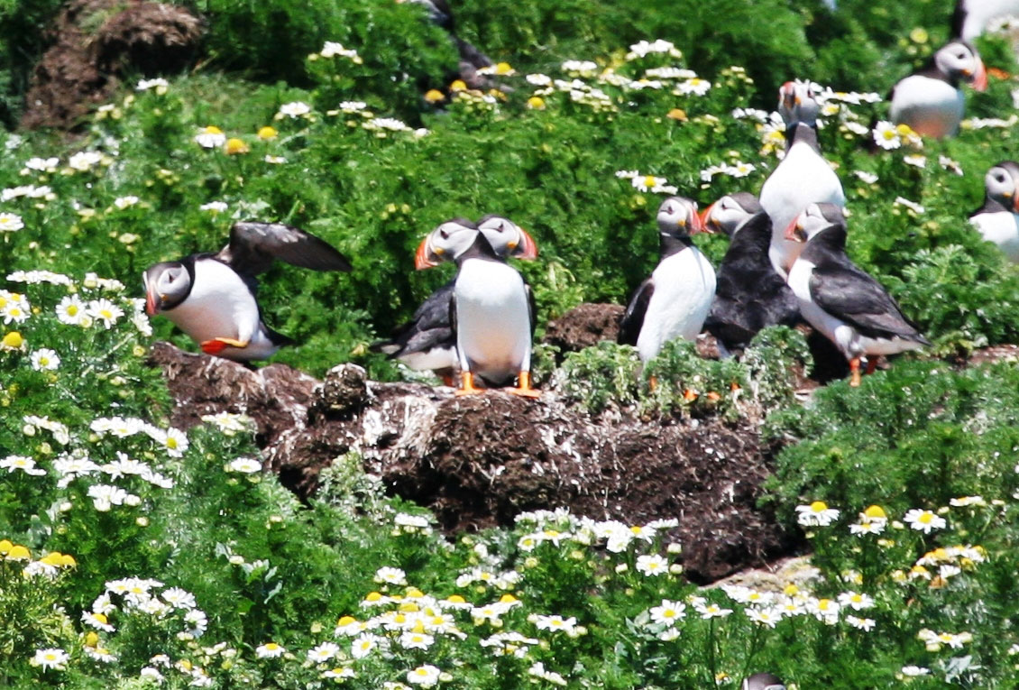 puffin-lingay-cottage