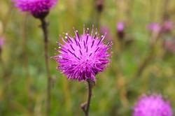 flower_lingay_cottage
