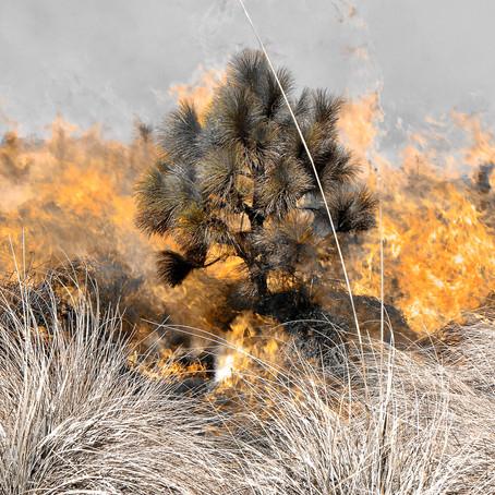 Iztaccíhuatl: Lecciones del fuego