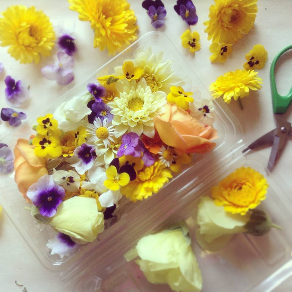 edible flowers1