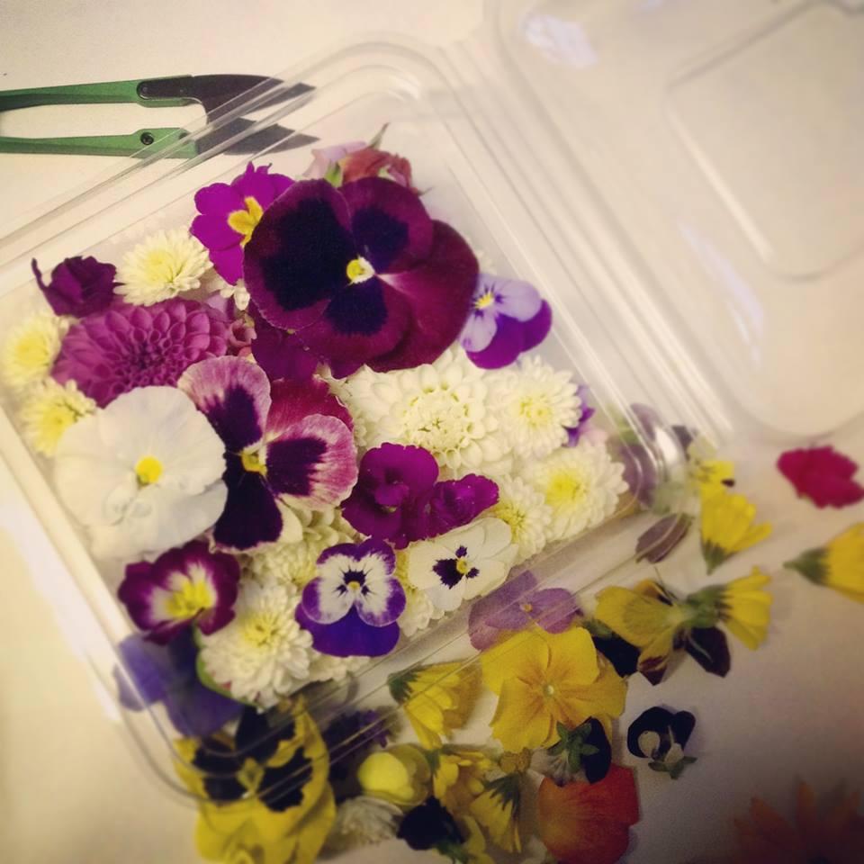 edble flowers4