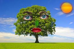 hardwood-tree (1)
