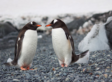 Will Penguins Only Be Seen In History Books?
