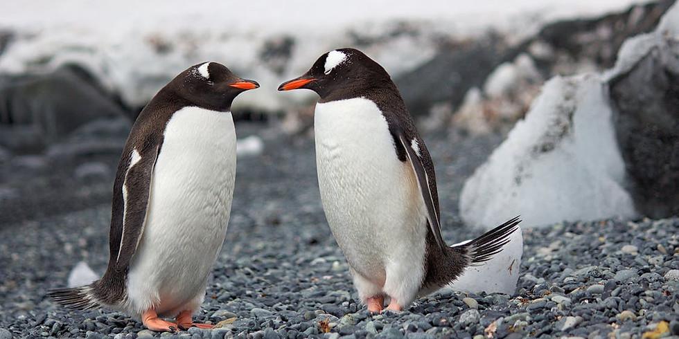 Drop-In Penguin Craft