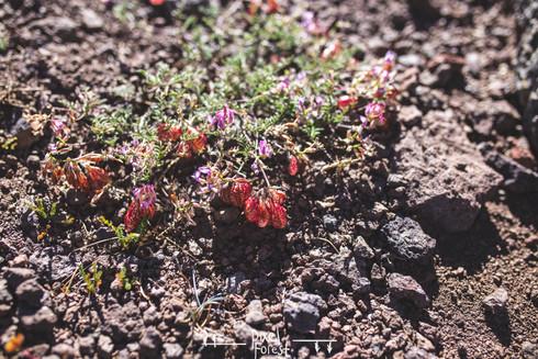 PixelForest_SonoraPass-14.jpg