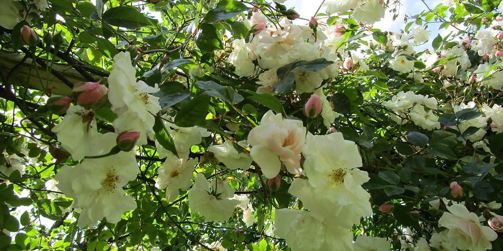 Garden visit - Hillcroft, Coombes Moor