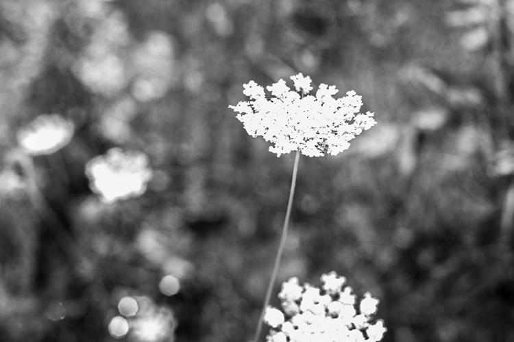 Vanessa G-Baker Photographe | Fleur