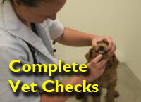 Screened Doodle Puppies Health Tested