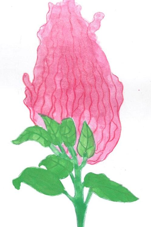Amaranth, Seeds