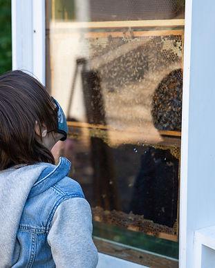 Bodhi Bees.jpg