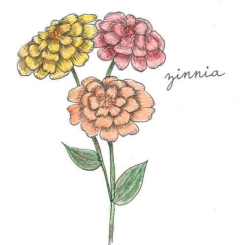 Zinnia, seeds