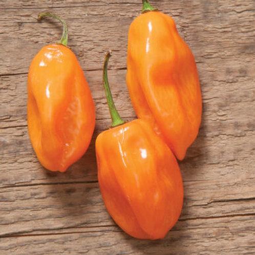 Habanero Hot Pepper Seedlings, 6-pack