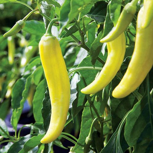 Banana Pepper Seedlings, 6-pack