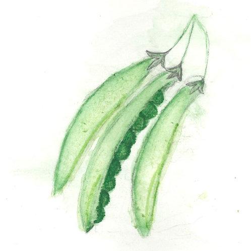 Pole Bean, seeds