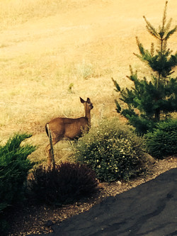 Even the deer love it here