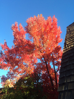 Come see the fall colors