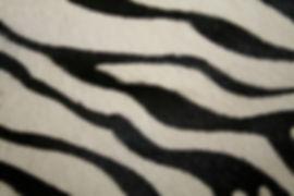 Zebra Print h_h.JPG