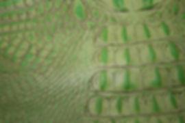 Green Croc Hide.JPG