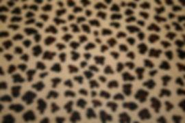 Cheetah Print h_h.JPG