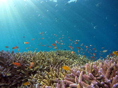 Reviving Earth's Dying Organ: The Coral Reefs