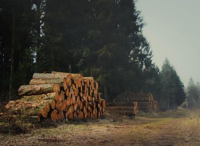 5 Kebiasaan Umum yang Merusak Hutan Kita