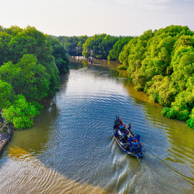 Earth's Superplant: Mangroves vs. Climate Change