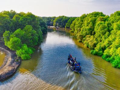 Tanaman Super: Mangrove vs. Perubahan Iklim