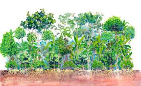 recuperação do solo