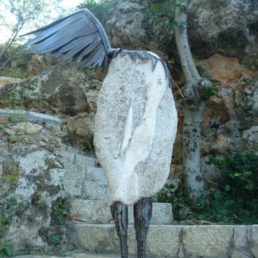 A Guardian Pelican