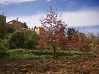 Moines de Tibhirine ou du Val Notre-Dame