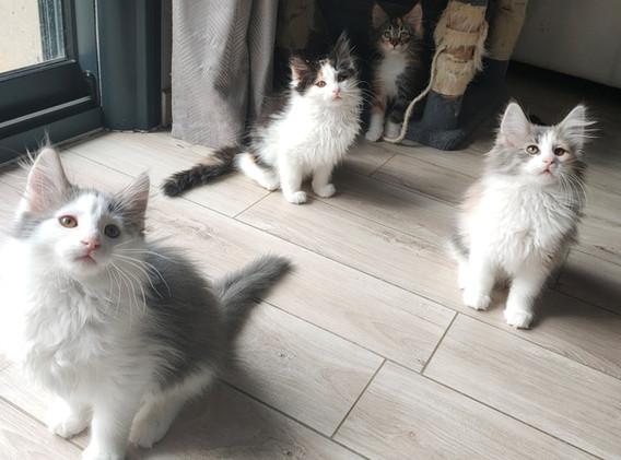 chatons1.jpg