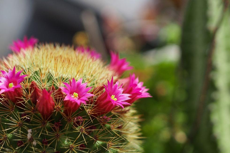 cactus-2161126_1920.jpg