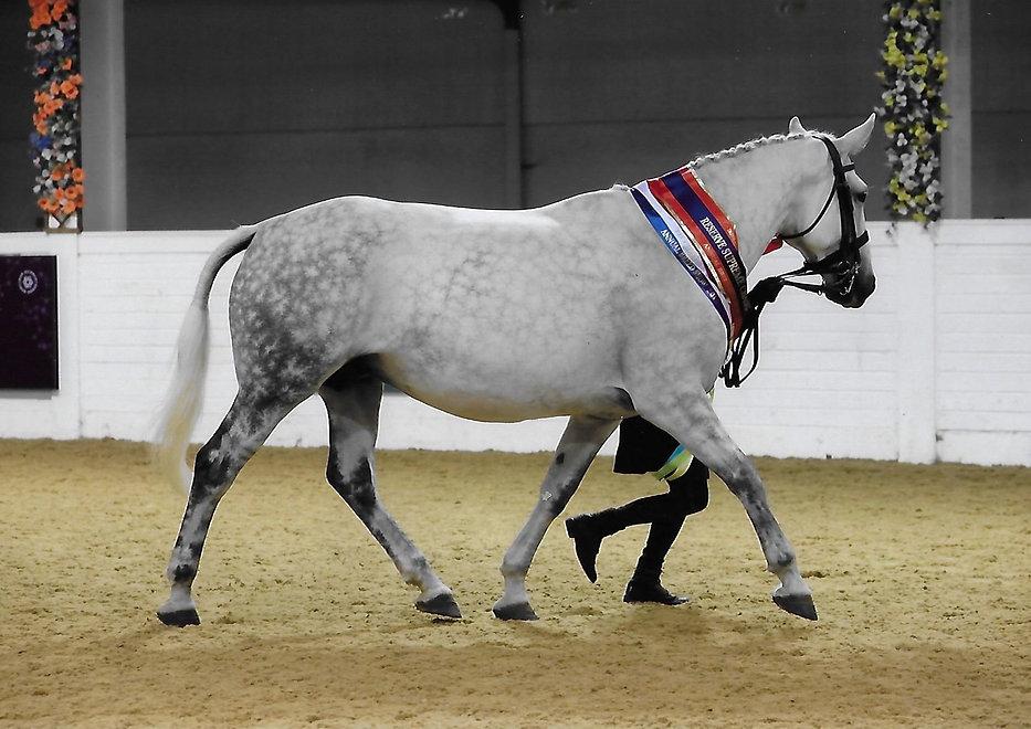 Anna breed show.jpg