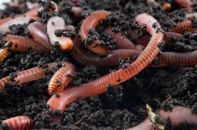 Vermicomposting Overview