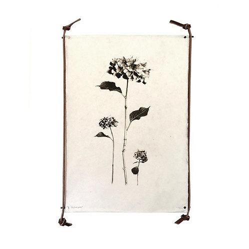amuse l Shoppeamuse l Barloga Studios Floral Prints l Wall Art